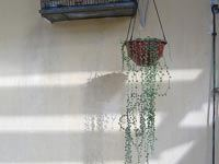 A hanging plant in the shade.