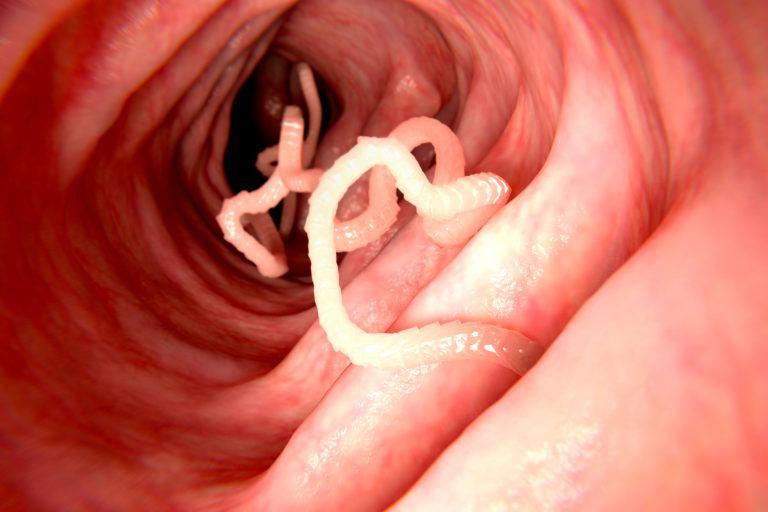 heilung für parasiten im körper apotheke chemnitz.jpg