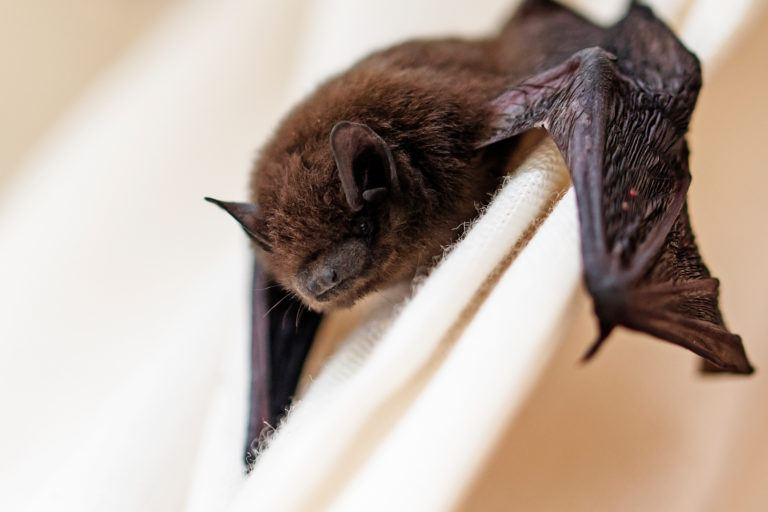 How to Get Rid of Bats How Much To Carpet A Bat on how to a pig, how to a grasshopper, how to a starfish, how to a fly, how to a black, how to a bowl, how to a bottle, how to a helmet, how to a hawk, how to a witch, how to a buffalo, how to a bus, how to a hat, how to a dinosaur, how to a baseball, how to a whale, how to a jaguar, how to a golf club, how to a seal, how to a crow,