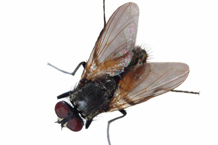 15 Weird Hobbies That'll Make You Better At Cockroach Control pests_bugs_gnats_blackfly-768x512