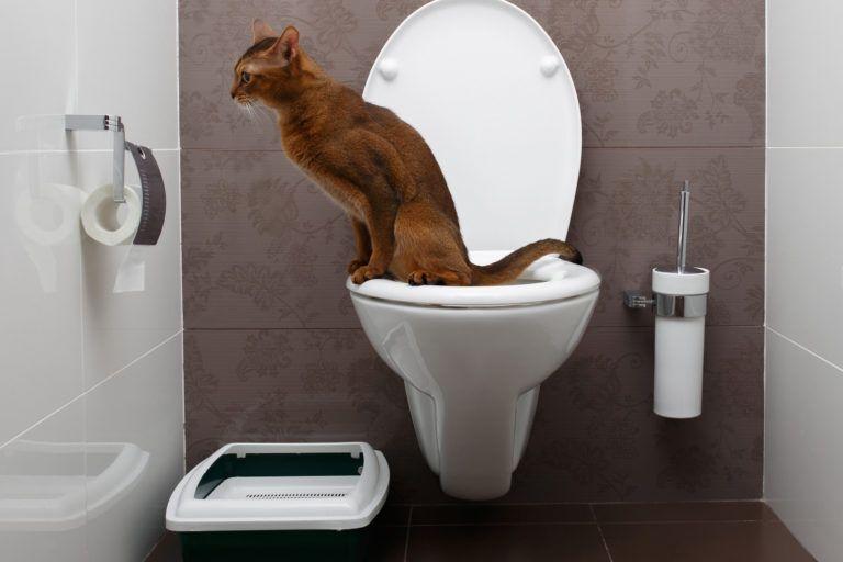 Cat Urine